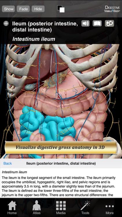 m & m essential anatomy 4 e pdf