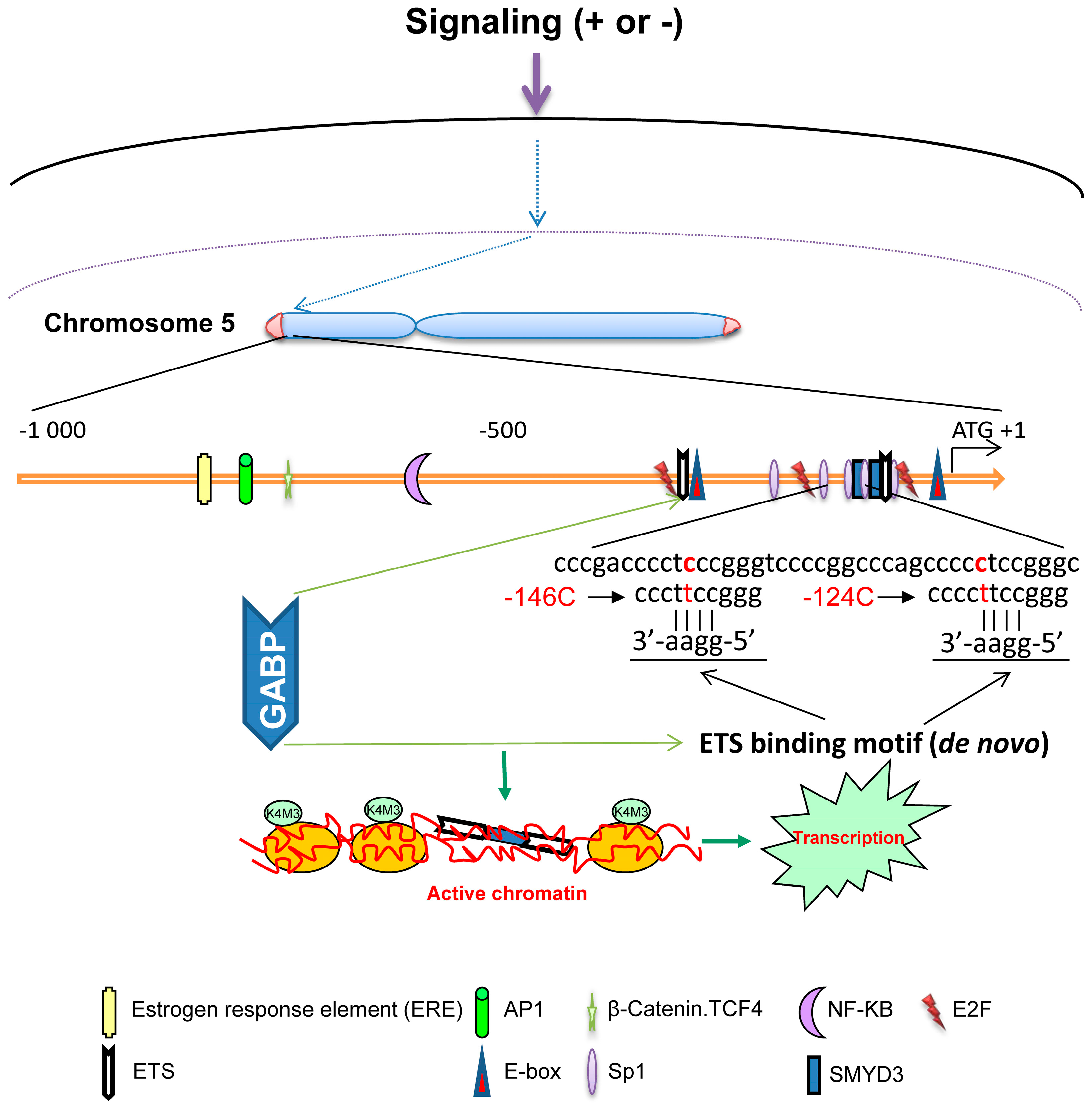 pdf mutation and cancer a model for human carcinogenesis 2