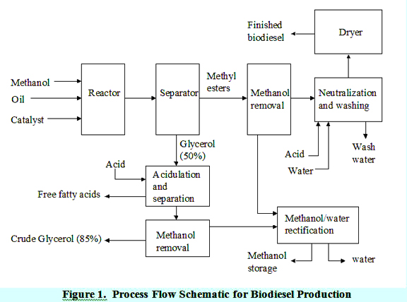 transesterification process for biodiesel production pdf