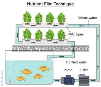 small scale fish farming techniques pdf